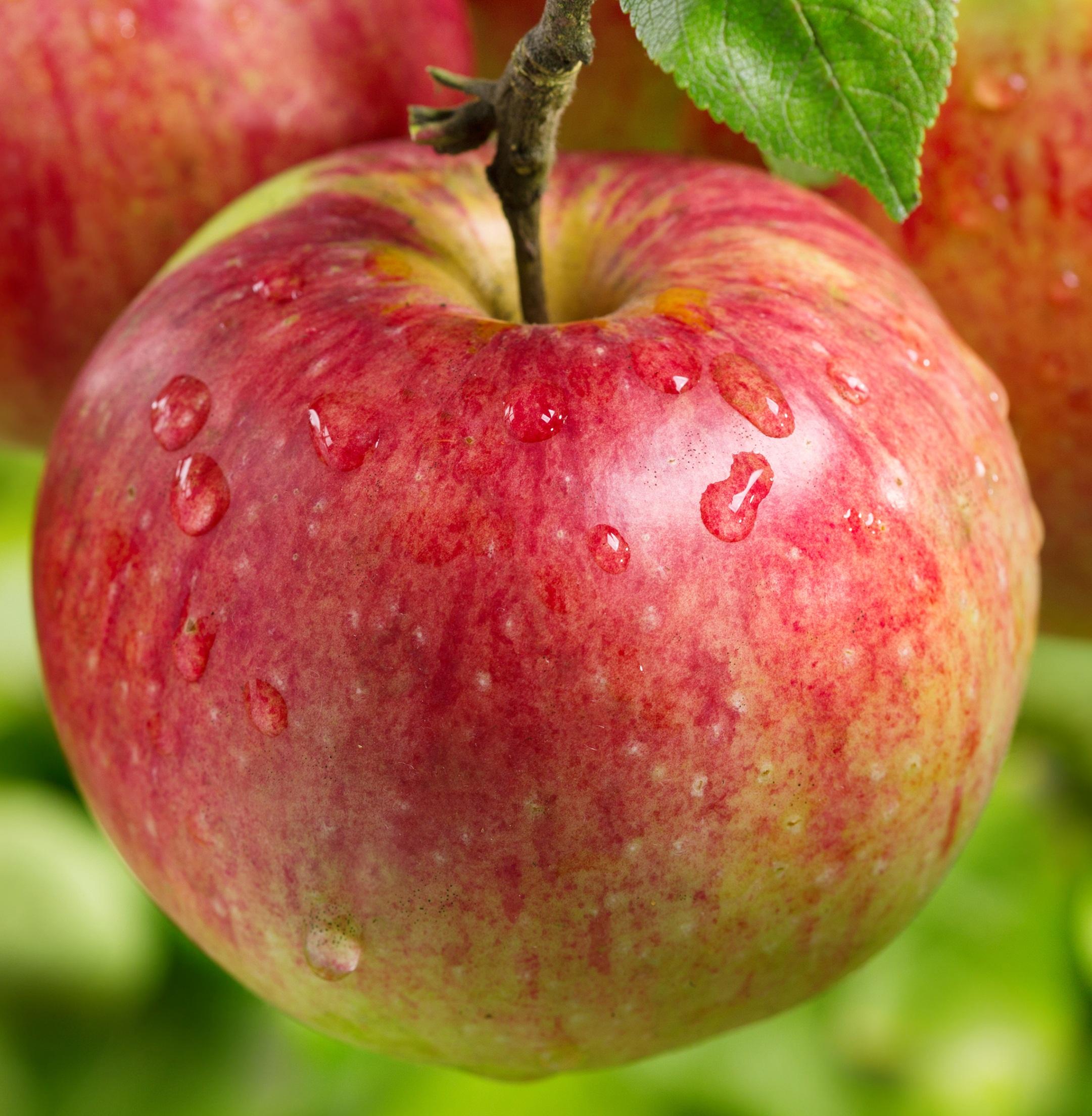 мама разделась яблоня яблочный спас описание фото отзывы вскоре гари
